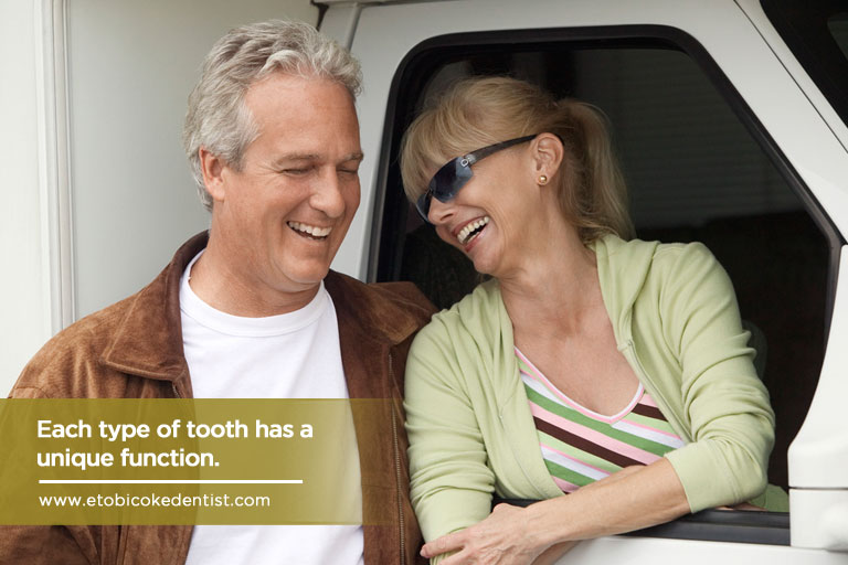 Each type of tooth has a unique function.